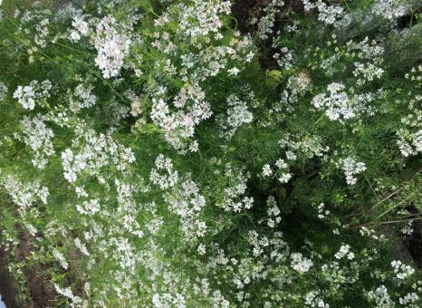 これは何の花でしょう??1